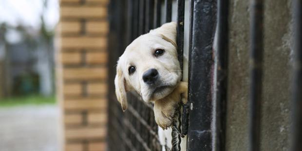 Nice : création d'une permanence anti-maltraitance animale