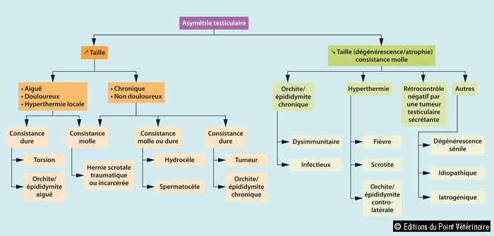 FIGUREDiagnostic différentiel lors d'asymétrie testiculaire