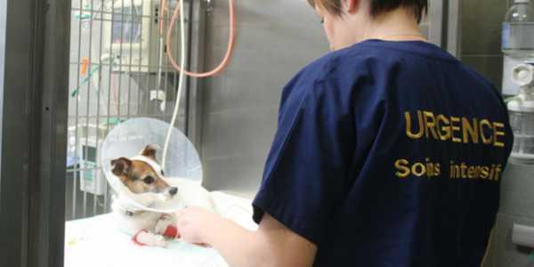 Une vétérinaire prodigue des soins à un chien.