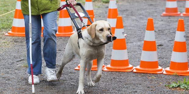 chien guide auprès d'une personne déficiente visuelle