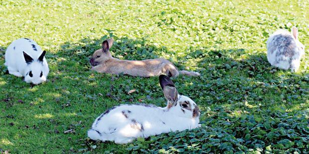 des lapins dans l'herbe