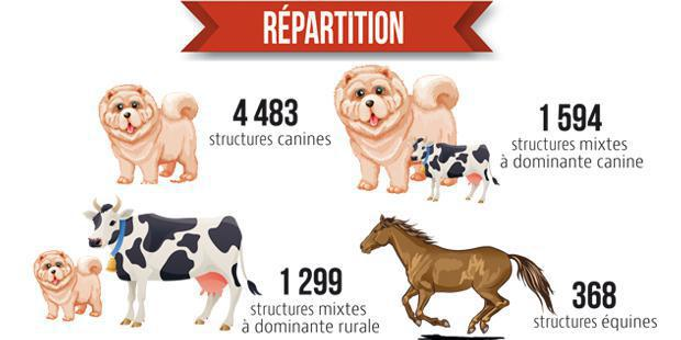 Infographie de la répartition des vétérinaires par structure