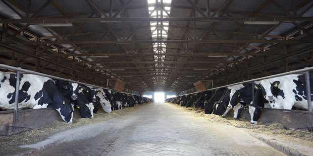 L'échographie des bovins n'est plus limitée à l'appareil reproducteur