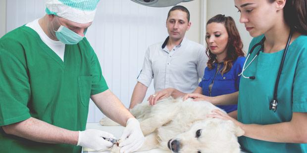 Protection sociale des vétérinaires