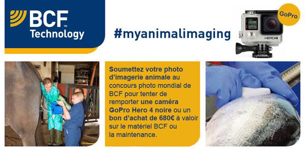 flyer de présentation du concours de photos d'imagerie vétérinaire BCF