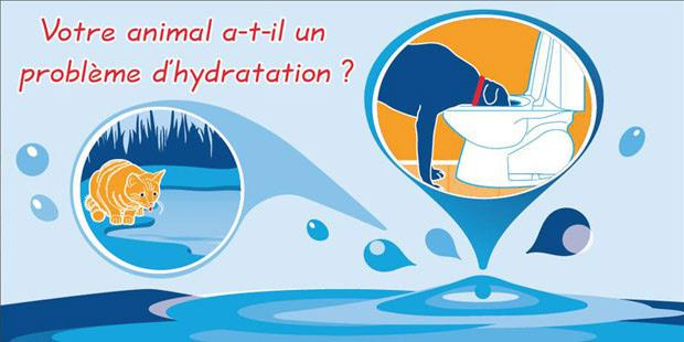 Hydratation de l'animal de compagnie