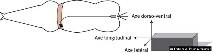 Figure 3: Orientation des accéléromètres dans le capteur 3D