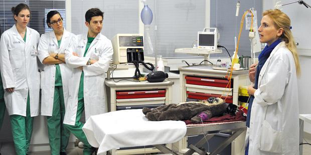 Situation d'urgence-réanimation, sur un mannequin électronique.