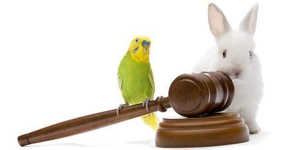 Justice et animaux