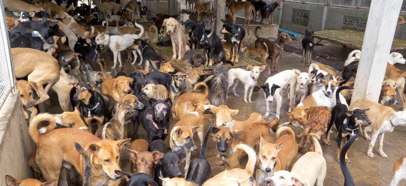 Des centaines de chiens dans un chenil en Asie