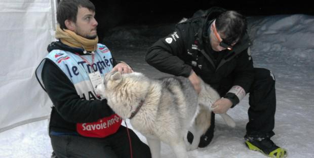 Séance d'ostéopathie lors de La Grande Odyssée Savoie Mont-Blanc
