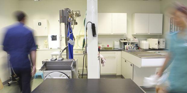 intérieur d'une salle de soins vétérinaire