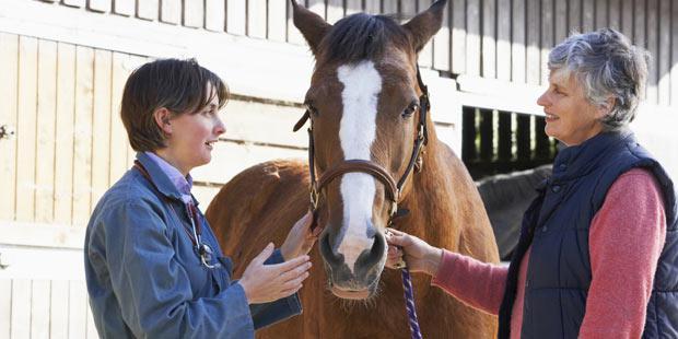Vétérinaire équin en consultation