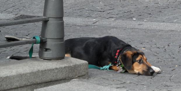 Un chien couché attaché à une rambarde dans la rue