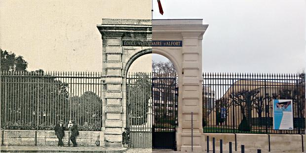 L'école d'Alfort avant et après