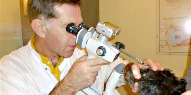 dépistage des maladies héréditaires oculaires canines