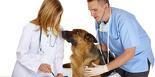 Entreprise vétérinaire