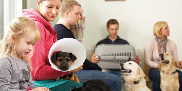 Salle d'attente dans une clinique vétérinaire