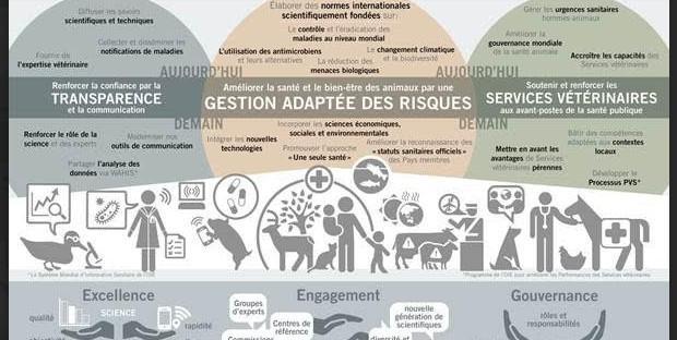 Infographie du 6e plan stratégique de l'OIE