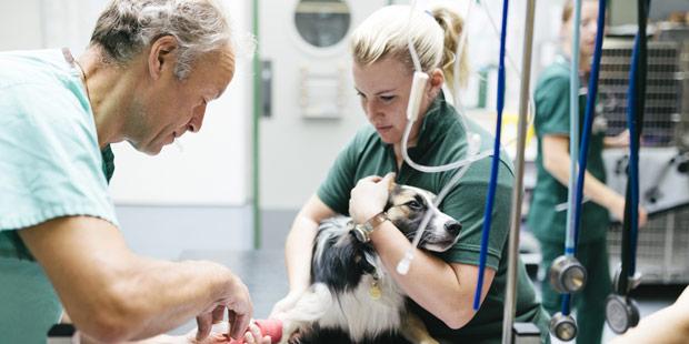 Employeur et salarié vétérinaires