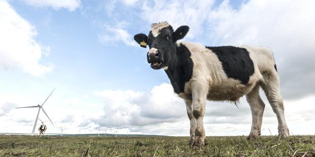 élevage et agro-écologie