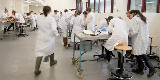 Faculté vétérinaire belge
