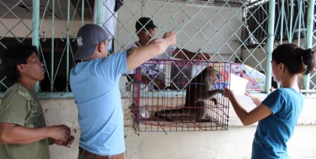 Macaque confisqué pour possession illégale