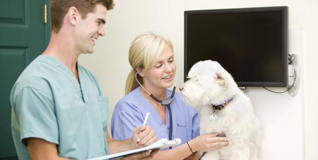 Les TPE vétérinaires face au RSI
