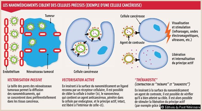 LES NANOMÉDICAMENTS CIBLENT DES CELLULES PRÉCISES (EXEMPLE D'UNE CELLULE CANCÉREUSE)