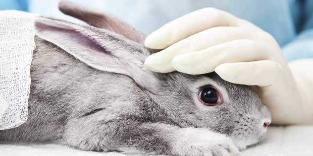 contention d'un lapin