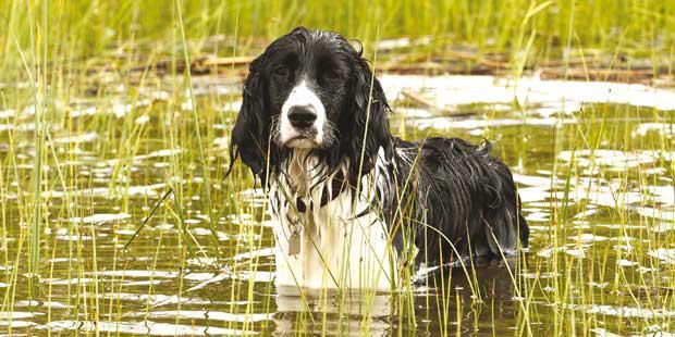 chien en contact avec de l'eau