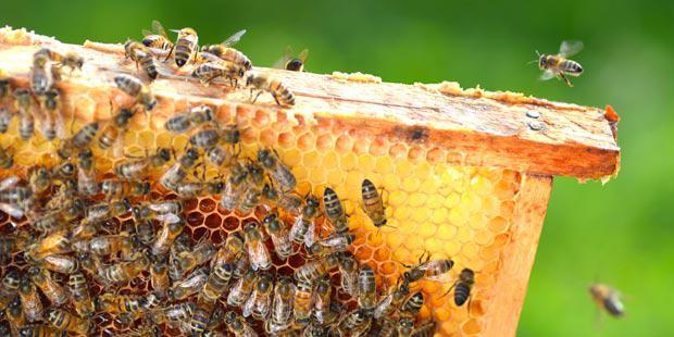 abeilles-alvéoles
