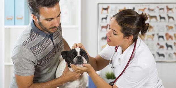 TPe petite structure vétérinaire