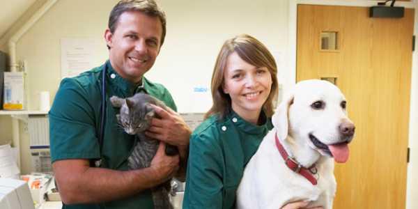 salariés vétérinaires