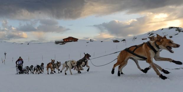 Course de traîneaux à chiens Lekkarod