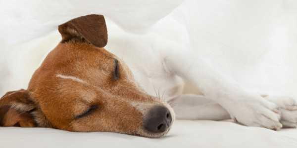 Une épidémie de grippe canine sévit aux Etats-Unis