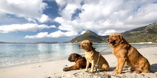 Chiens sur la plage