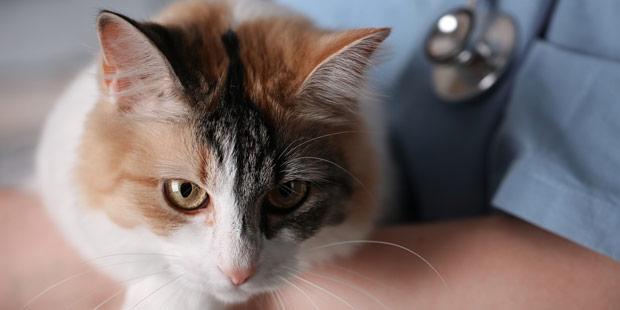 chat dans une clinique veterinaire
