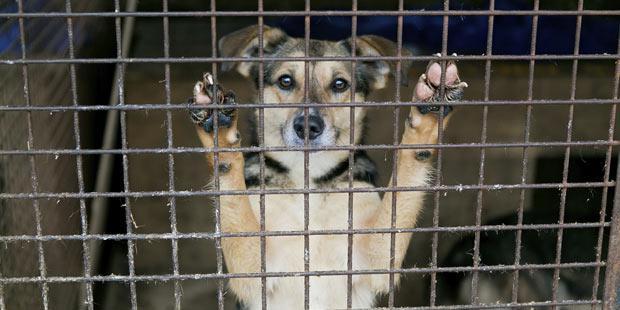 refuge de chiens