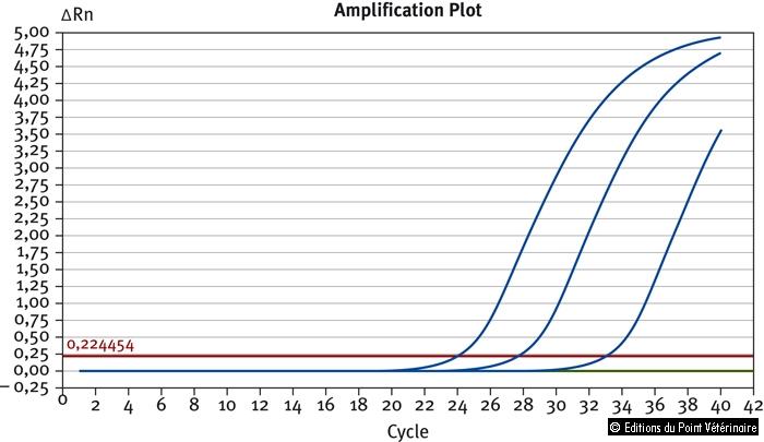 Figure 2: Courbes PCR caractéristiques de l'amplification du gène seeI, spécifique de S. equi