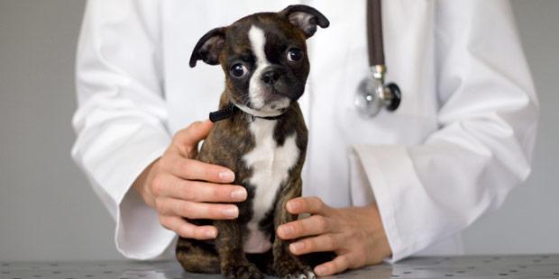 Chien et vétérinaire