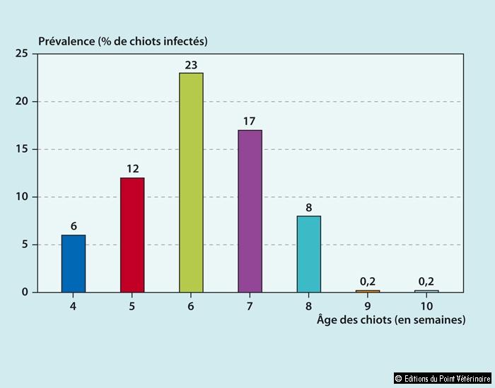 FIGURE 2Prévalence du parvovirus canin de type 2 en fonction de l'âge dans un élevage infecté