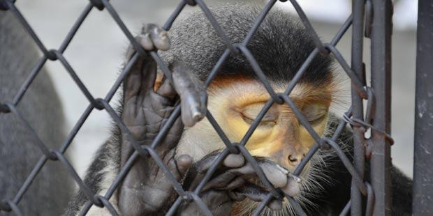 Lutte contre le trafic d'animaux sauvages