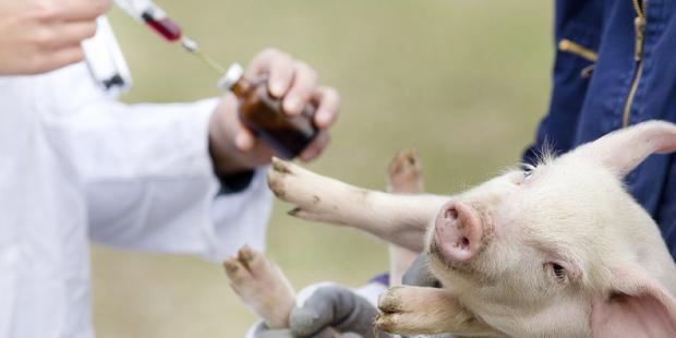 Stratégie pour lutter contre l'antibiorésistance