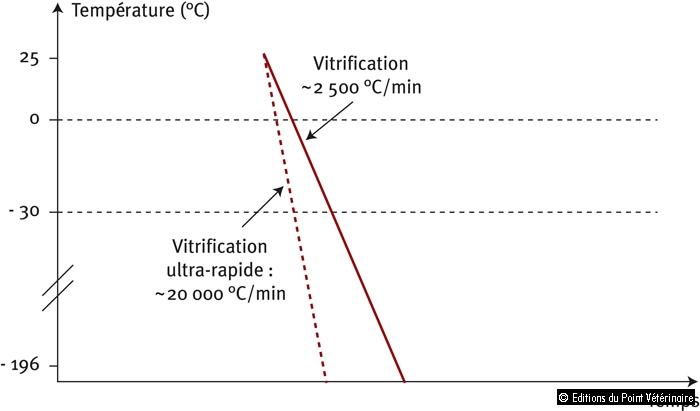 Figure 2: Courbe de descente de température lors de vitrification et vitrification ultra-rapide
