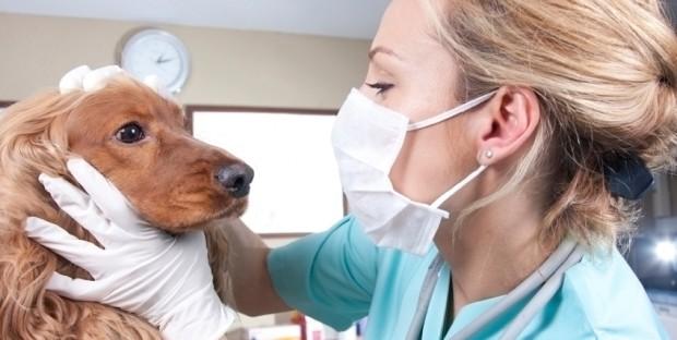 Vétérinaire en consultation canine
