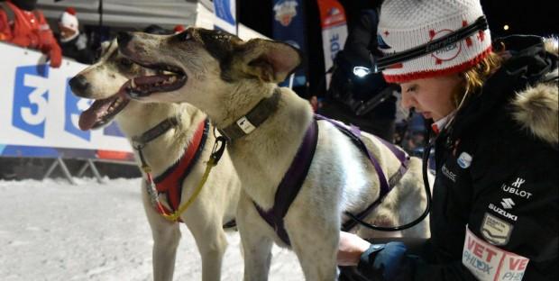 Vétérinaire à la Grande Odyssée Savoie Mont-Blanc