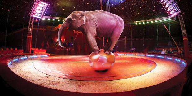 Un éléphant sur un ballon dans un cirque