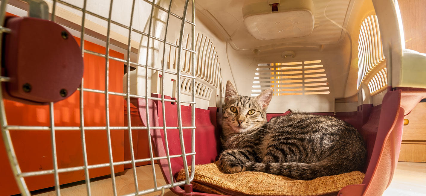 chat dans cage de transport
