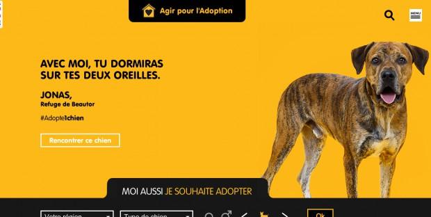 campagne de sensibilisation sur l'adoption